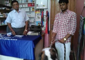 City Pet Clinic