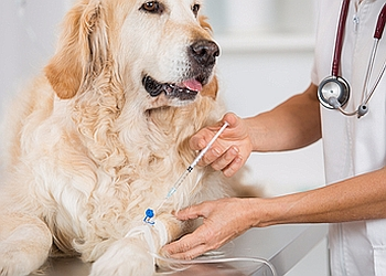 Dr. Mankad's Veterinary Clinic