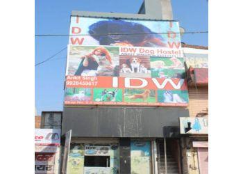 Indian Dog World