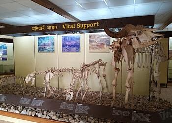 Kanha Museum