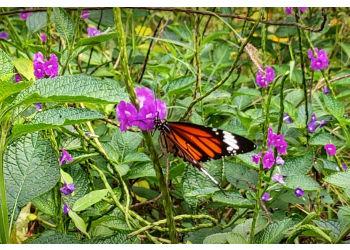 Ovalekar Wadi Butterfly Garden